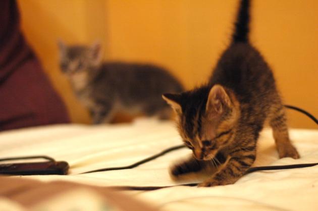 Ce petit garçon trouve ça très drôle de détruire mon fil de cellulaire. Aucune pitié.