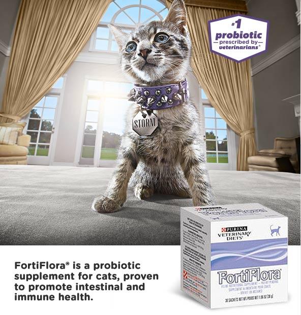 fortflora_feline_hero_consumer