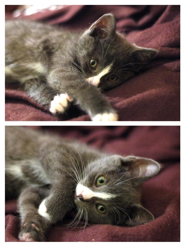 Jannoune la chatonne top modèle. Non mais arrête d'être quioute comme ça, c'est cruel pour mon petit coeur!