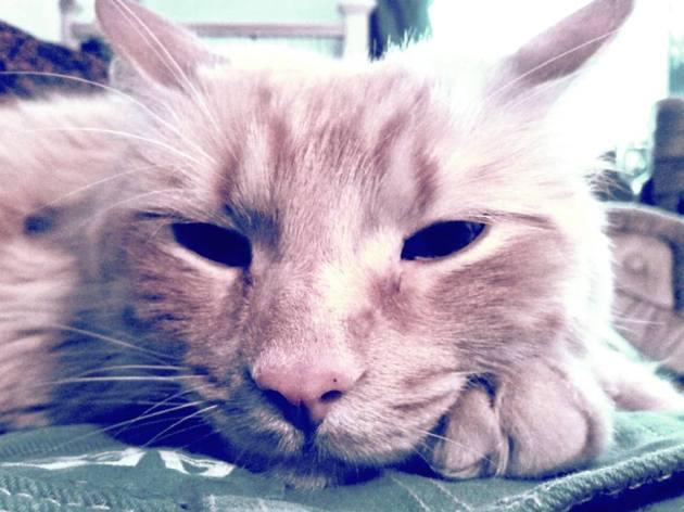 Leeloo face
