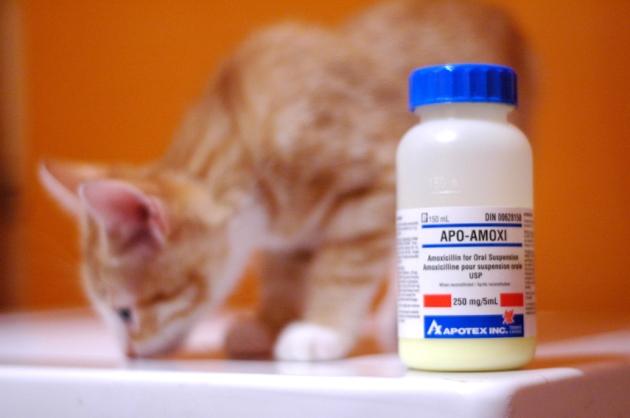 Andrew, ça l'énerve pas bin bin, les médicaments.