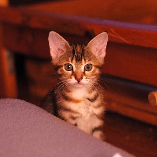 La minuscule Rosie, lors de son arrivée au Manoir Po.