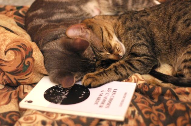Dans ma série « Chatons et poésie », voici mes démons avec « Les choses de l'amour à marde », de Maude Veilleux.