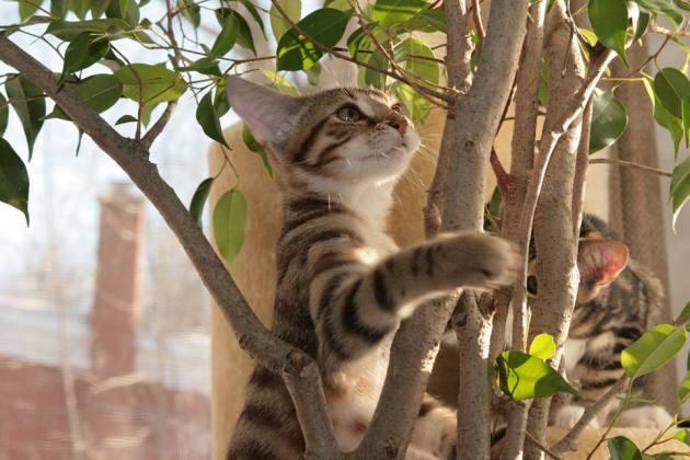 barbajoues-arbre