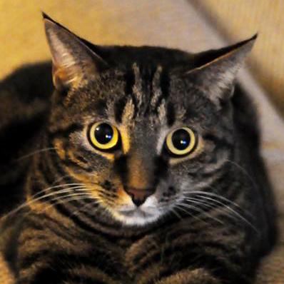 Est-ce un tarsier? Mais non, c'est Blais le chat inquiet!