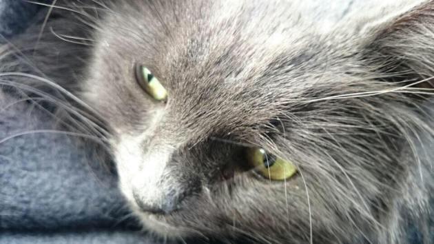 J'ai craqué pour ses petits yeux verts tout doux... *_*