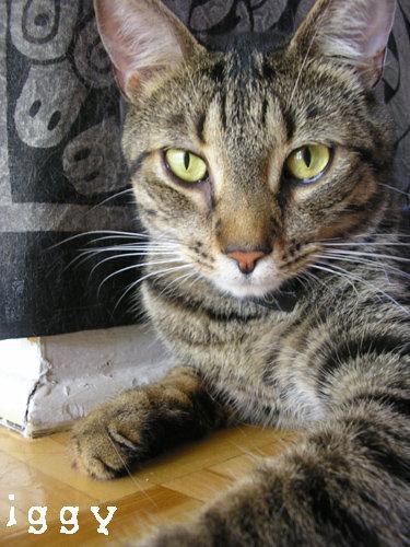 Iggy (2002-2015)