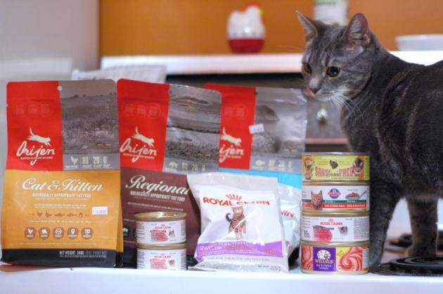 Whitney examine et approuve les achats et les cadeaux de chez Pattes à poil. Étrangement, la souris a disparu au moment de faire la photo. Souris Houdini, où te caches-tu?