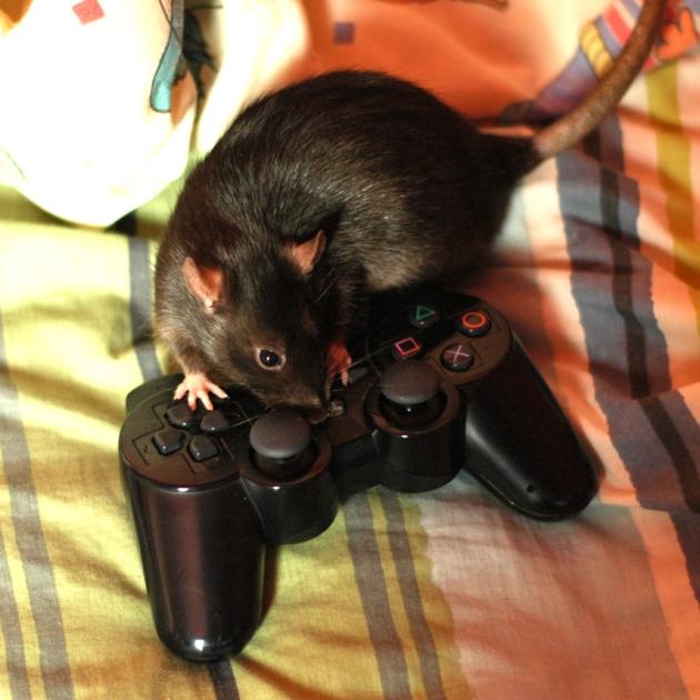 Tout le monde aime le gaming au Manoir Po.