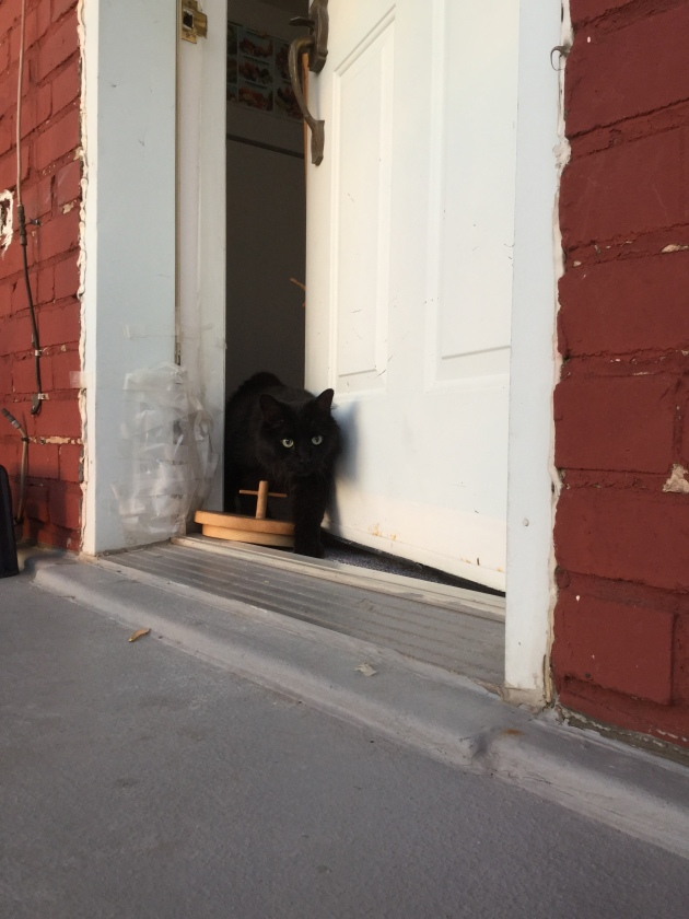 Titi, c'est un monsieur de balcon. Bon, cette fois il est allé fouiner chez la voisine, mais en temps normal, il reste chez lui, bien tranquille.
