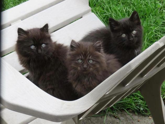 Les trois petits errants de Rosemont. J'ai hâte de vous les présenter!