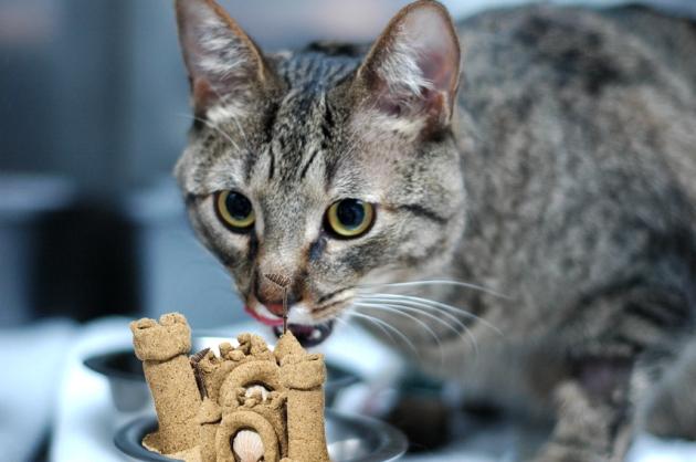 Je crois que ce repas est totalement inapproprié pour toi, mon chat brun.