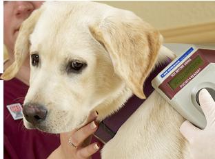 Comment scanner un jeune labrador.