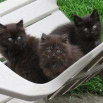 chatons(3)