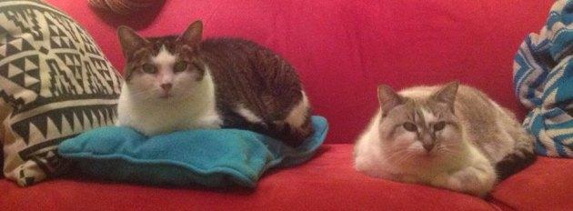 Si tu adoptes Nini et Sissi, il te faut un divan deux places (minimum) et des ti-coussins.