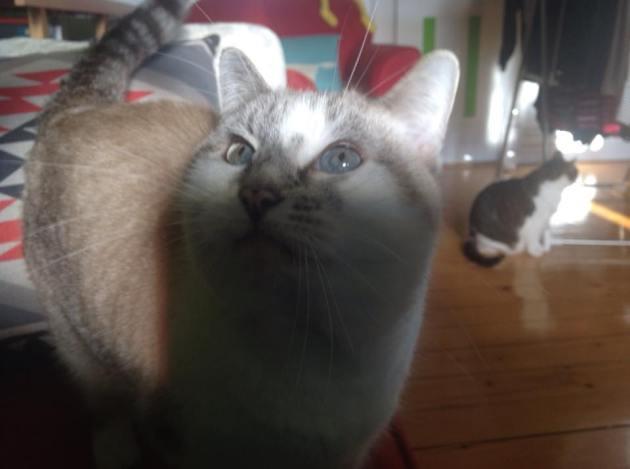 Sissi a un nez de designer et des yeux bleus clairs qu'on ne peut voir que par temps clair, car le reste du temps, elle a des pupilles de droguée.