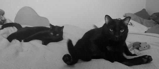 Bela avec Siouxsie